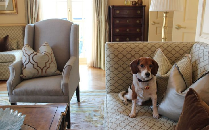 The Cutest Hotel Pets   Travel + Leisure