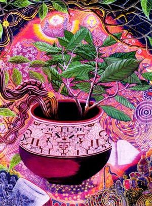 The Ayahuasca plant::Used to aid in spiritual awareness and enlightenment for centuries.. .