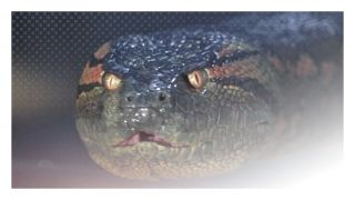 Anaconda (1997) - directed by Luis Llosa & written by Hans Bauer, Jack Epps Jr., Jim Cash http://terror.ca/movie/tt0118615
