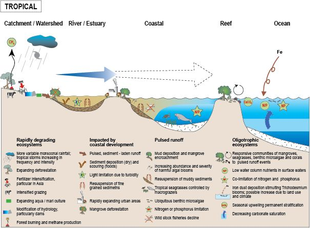 effects of nitrogen on coral reefs in australia The impact of nitrogen eutrophication on caribbean coral reefs: effects of nitrogen on coral must be investigated to determine if they are coral reefs, as an.