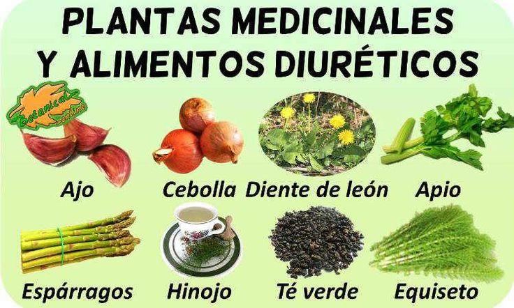 Plantas medicinales diuréticas - Botanical-online ...