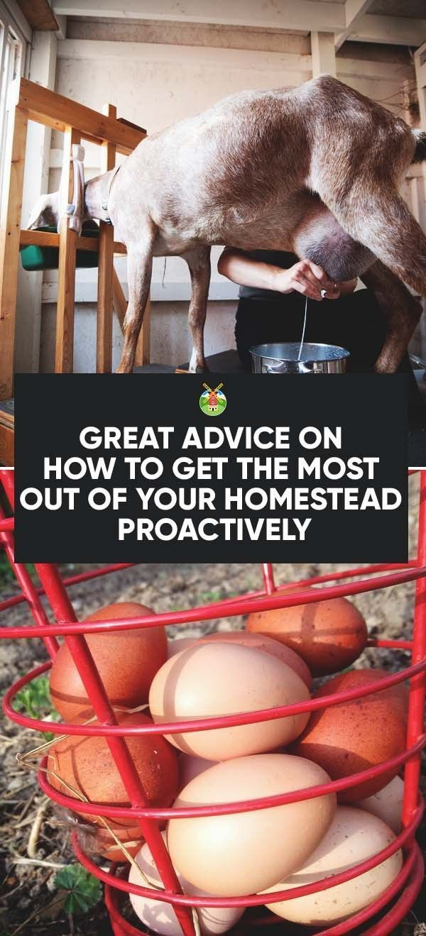 11 Advice to Get the Most Out of Your Homestead and Save More Money