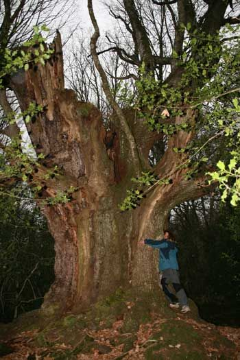 excursiones a bosques desnudos- Ruente (Cantabria)