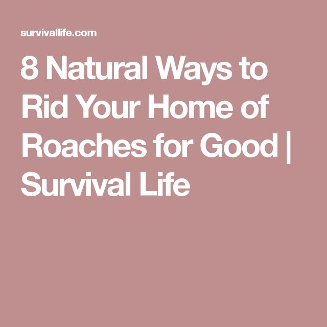 8 Natural Ways to Rid Your Home of Roaches for Good | Survival Life