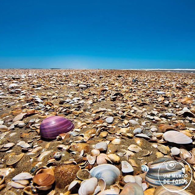 Já viu outra praia com tanta concha? Exato, é porque não existe. A praia dos concheiros é uma só, e fica aqui pertinho, no nosso litoral sul Isso acontece porque correntes marítmas levam grandes quantidades de conchas para a orla dessa praia. O resultado é essa diversidade de cores, formas e texturas.  Praia dos Concheiros - Chuí, RS  #fotografia #aventura #viagens #rs #chuí #parquesnacionais #praia #beautifulplanet #travelphotography #praiadosconcheiros #brazilnature #brazil…