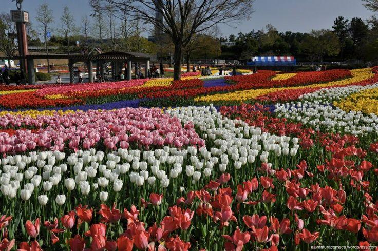 Tulipas no Parque Kiso Sansen (Gifu)
