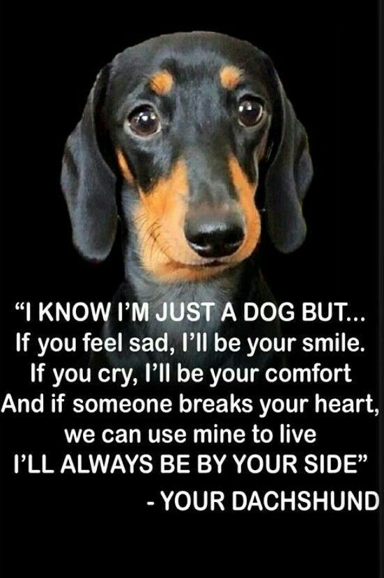 Pin By Vivi On A Furry Friends The One With The Waggly Tail