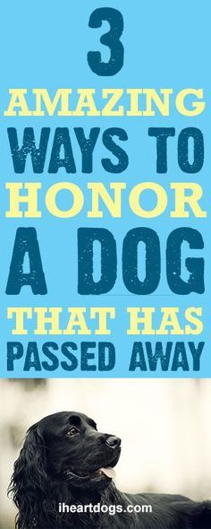 3 Amazing Ways To Honor A Dog That Has Passed Away