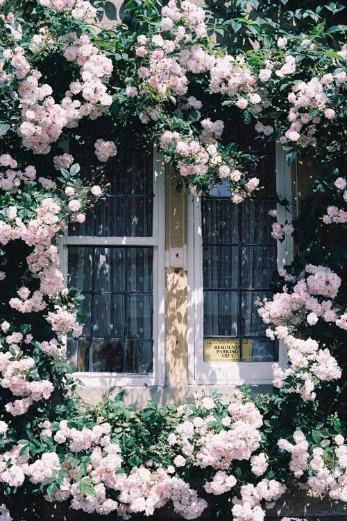 Always wanted roses round my window....