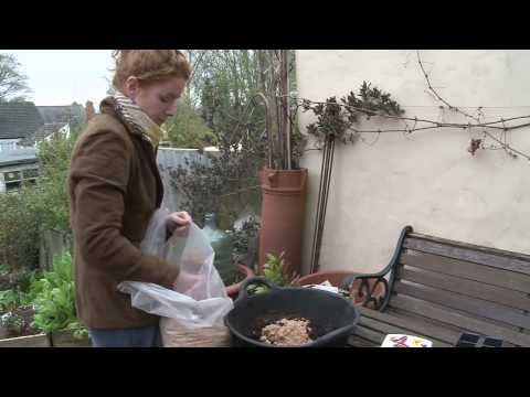 Alys Fowler: Planting seeds and growing vegetables