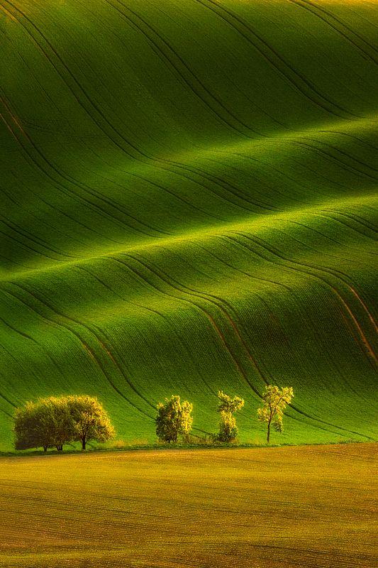 pawel kucharski: Field, Photos, Favorite Places, Nature, Color, Green, Landscape Photography, Italy, Paul Cook