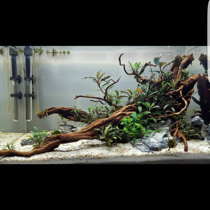 720 best images about aquascaping on pinterest plants for Decoration zen aquarium