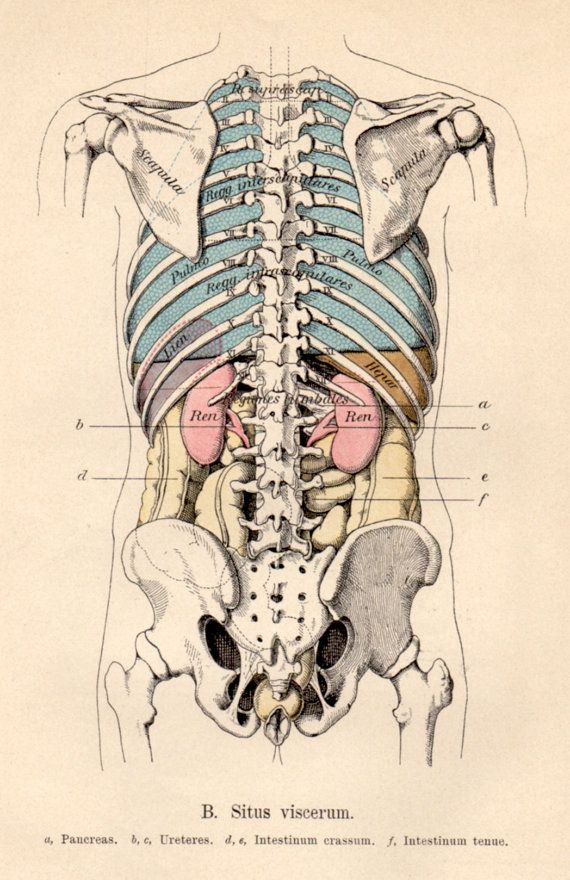 39 best Anatomy illustrations images on Pinterest | Human anatomy ...