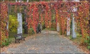 Image result for park na zdrowiu