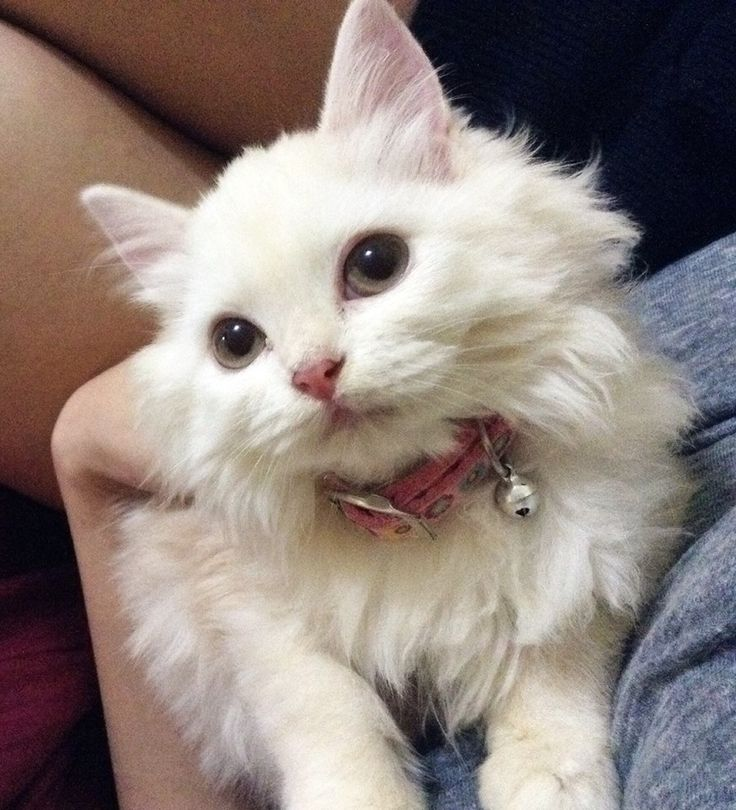 """She reminds me of the female kitten named Marie from """"The Aristocats"""""""