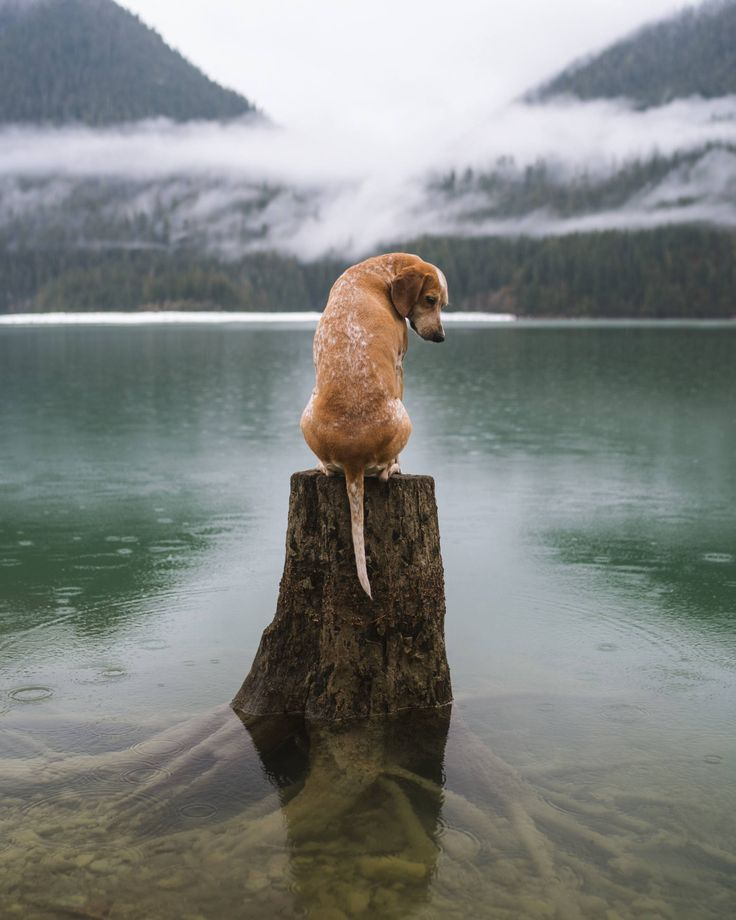 Buy Maddie on a Tree Stump by Theron Humphrey from United States, a limited edition art print series printed on high quality archival Epson paper, For sale, Limited edition of 100, Price is $150, Size is 10 x 8 in