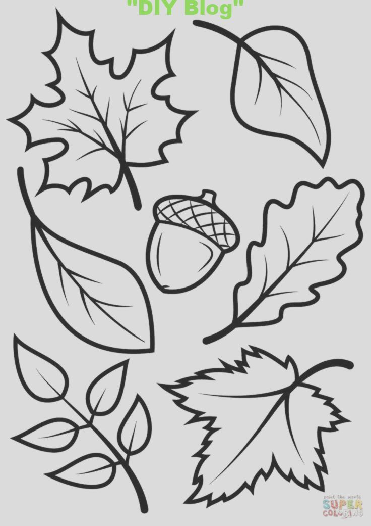 Autumn Coloring Book For Children Autumn Leaves And Acorn Coloring Page Free Printable Color Fall Leaves Coloring Pages Fall Coloring Sheets Leaf Coloring Page