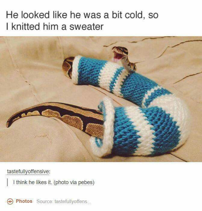 SNAKES ARE SO CUTE