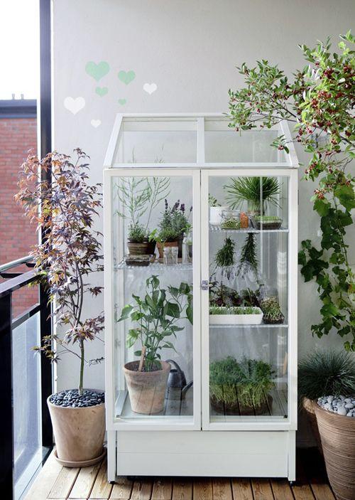 For the urban gardener: Idea, China Cabinets, Balconies Gardens, Minis Greenhouses, Herbs, Indoor Greenhouses, Plants, Green House, Small Greenhouses