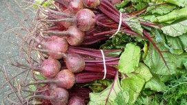 Barbabietole rosse: proprietà antitumorali
