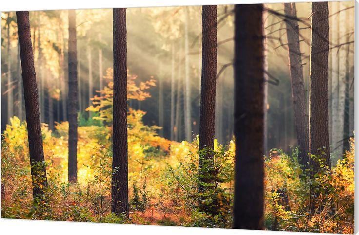 158 best luxe wanddecoratie van wallstars h233t canvas