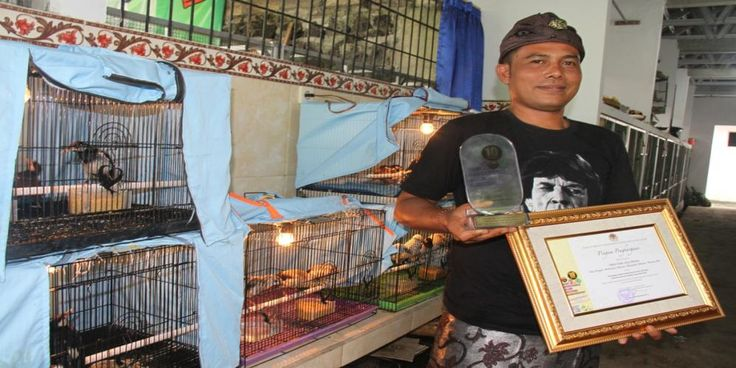 I Ketut Gede Jiwa Artana (pictured) and Bird Song Breeders Group (Kelompok Penangkar Kicau Bali) have been recognised by 	  Indonesia's Minister of the Environment and Forestry, Dr. Ir. Siti Nurabaya, for their  dedication and success in breeding the critically endangered Bali Starling.