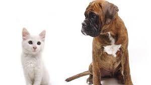 ¿EXISTEN CHEQUEOS DE SALUD PARA NUESTROS #ANIMALES?🐶🐱 Al igual que las personas, nuestros animales necesitan revisiones sanitarias, que nos permitirán evaluar su estado de salud y detectar de forma precoz alteraciones o enfermedades. En Clínica #Veterinaria Deros, disponemos de los medios necesarios para realizar dichas revisiones (Radiología, Análisis, Ecografía, Electrocardiografía, etc.) así como una dilatada experiencia.