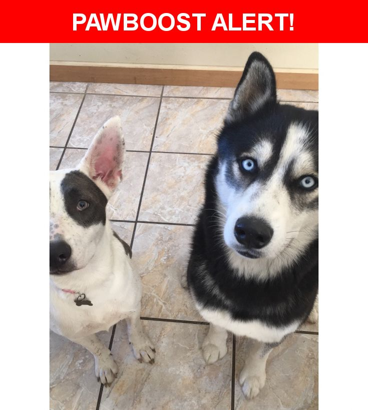Please spread the word! Leah And Kaleb was last seen in Balch Springs, TX 75180.  Description: Leah is a Pitbull Husky Mix and is about 10 months old. Kaleb is a full Siberian Husky breed and is turning 2 on November 28. No tags. No chip.   Nearest Address: Lake June & Hickory Tree