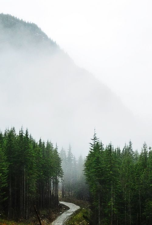 mist + mountain + pines + pathway