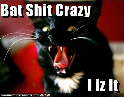 haha.: Cat Christmas, Blackcatsrul Blackcatsrul, Shit Crazy, Blackcatsrul Merrycatmus, 4Black Cat, Bats Shit, Christmas Cat, Cat Oー, Grumpy Cat