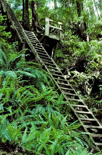 Hike the West Coast Trail, British Columbia, Canada