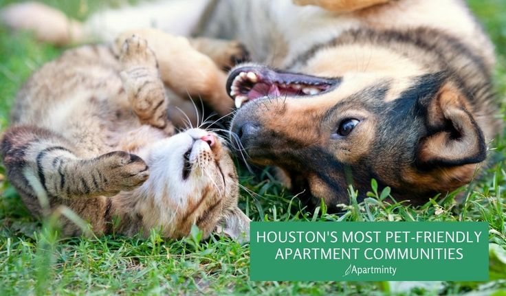 38 best moving to houston images on pinterest houston for Most apartment friendly dogs