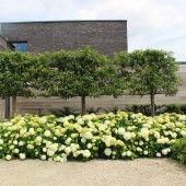 Op deze pagina kan u enkele tuinvoorbeelden bekijken. Klik op de onderstaande foto's om deze te vergroten.     Aan de hand van deze tuinvoorbeelden,...