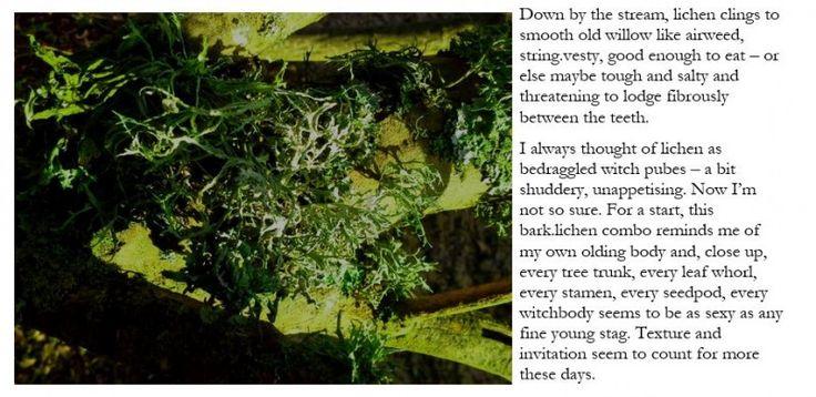 witch lichen
