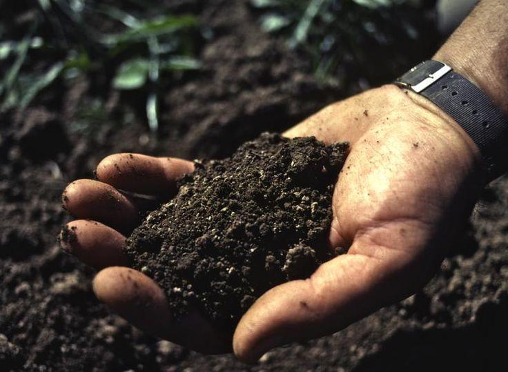 118 best gardening tips wisdom images on pinterest for Soil 205 oregon state