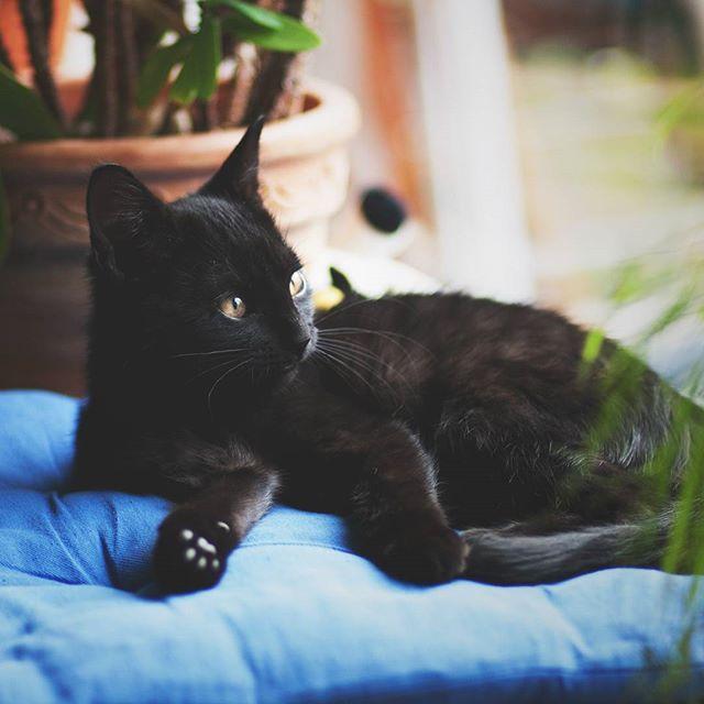 Chilling on a lazy Sunday  #cat #cute #cutecat #katzenbabys #tierfotografie #animalphotography #tiere #süsse #katzen #lightroom
