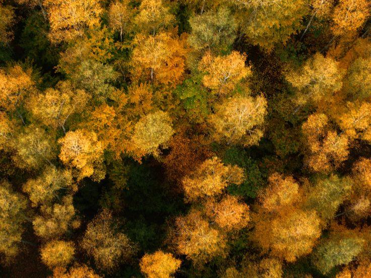 Ponad drzewami