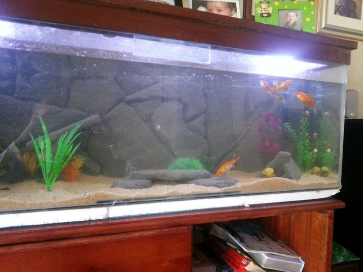 17 best images about diy fish tank decor on pinterest for Fish tank caves