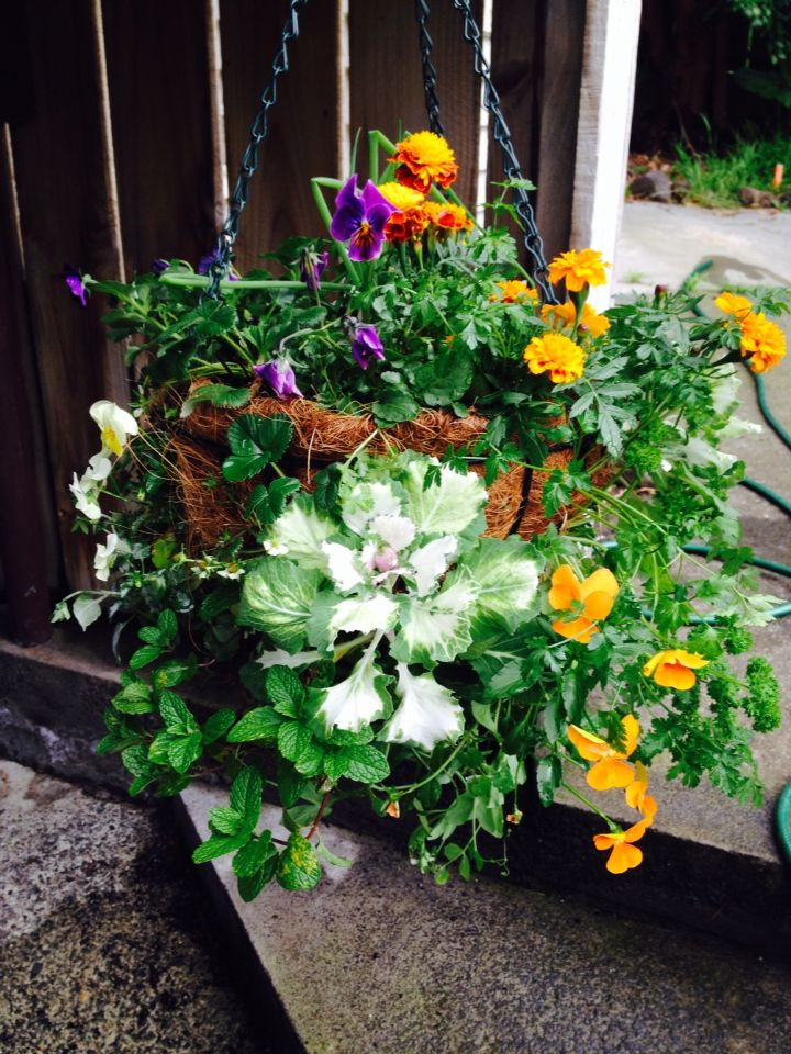 Living herb basket with edible blooms