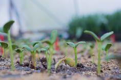 SEED STARTING DO'S & DONT'S Floret_Seed Starting 101-5