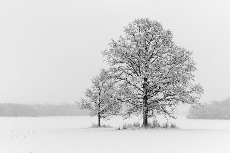 Two and the rest - Winter landscape with two trees. Keila, Estonia 2016.