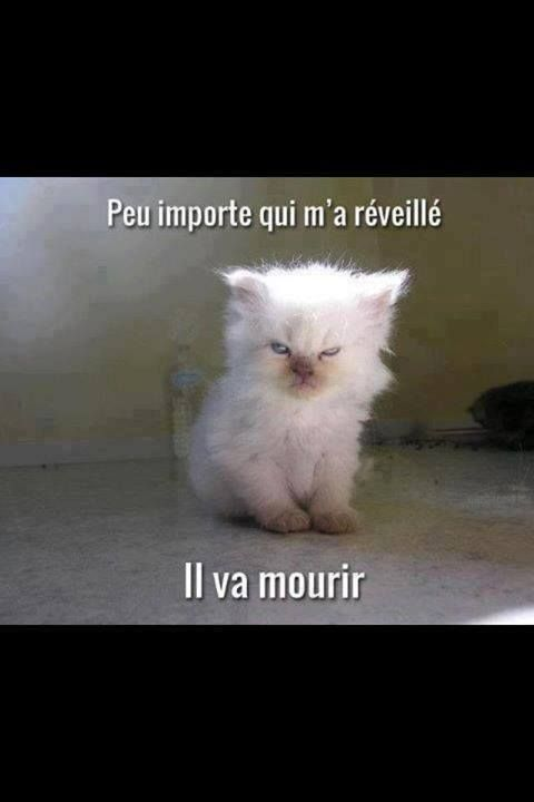 Pas content le minouche ;) #Pinterest #France #chat