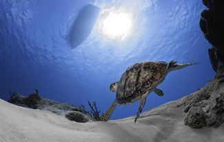 We can't help it — we're totally turtle obsessed here at Scuba Diving magazine. If you love them as much as we do, check out these amazing images and facts about these ancient marine reptiles! #ScubaDivingMagazine #scubadivingquotesfunny