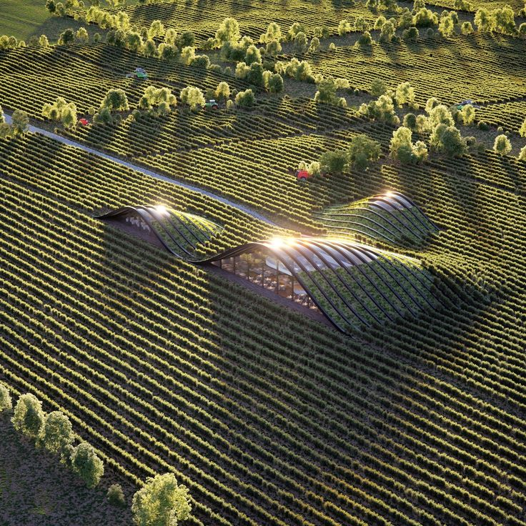Vineyard by Khachaturyan Michael