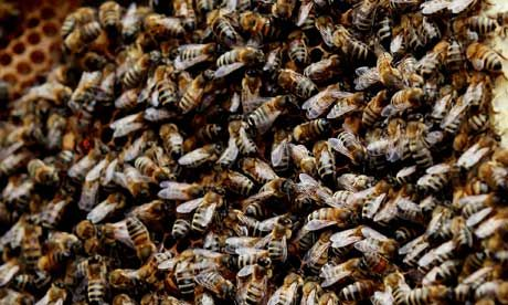 Buzzfeeds: the effects of colony collapse disorder and other bee news
