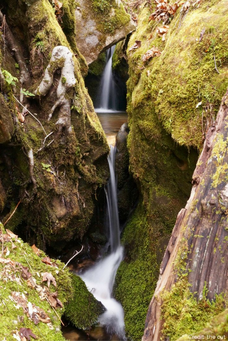 The Clifty Wilderness in Kentucky's Red River Gorge was established on December 23nd in 1985. The wild and scenic Red River bisects the wilderness area. The wilderness has more than 750 different flowering plants and 170 species of moss.