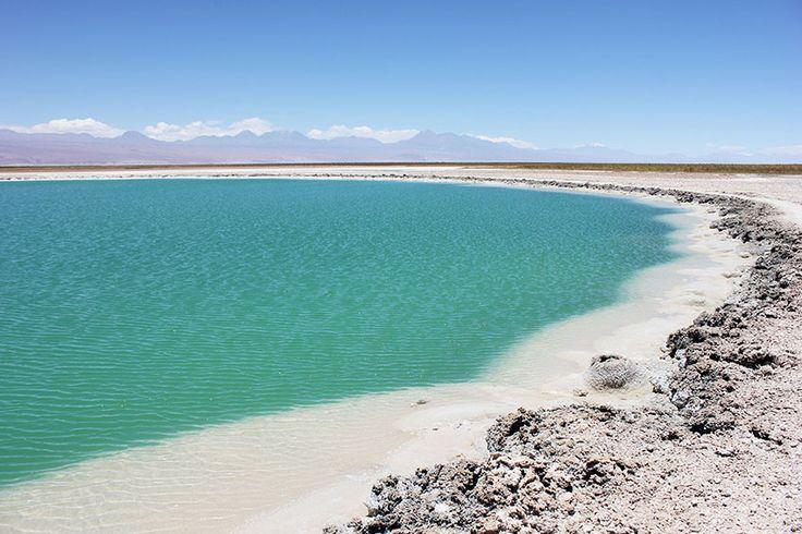 Chile Fotos Laguna Cejar