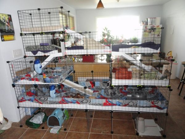 It's so big! - Guinea Pig Cage. My two guinea pigs would love this.