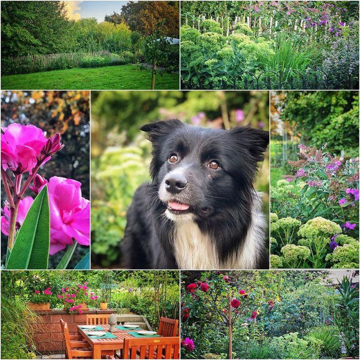 Der Spätsommer rückt näher und ist auch im Garten nicht zu übersehen. Zu mei…