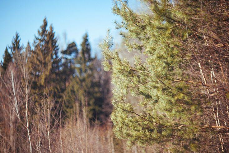 summer spring forest